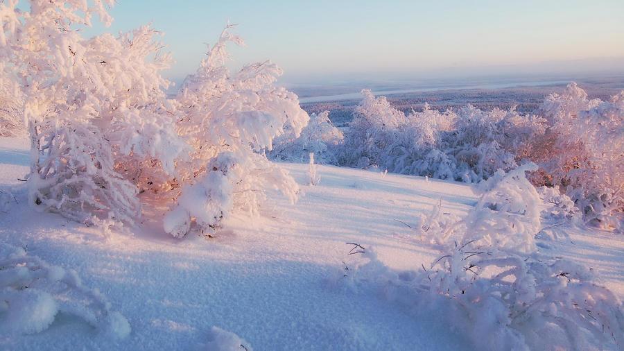 Уникальные обои Зимних лесов Природа, Зима, Лес, Закаты, Восходы 764391018
