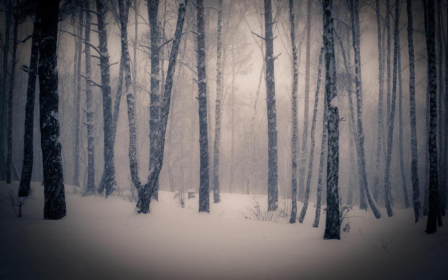Уникальные обои Зимних лесов Природа, Зима, Лес, Закаты, Восходы 2095481878