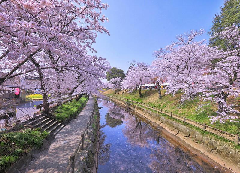 Найновіші Фотошпалери Цвітіння Сакури в Японії Природа, Фотошпалери Цвітіння Сакури, Фотошпалери японської Сакури, Фотошпалери квіти, Фотошпалери Японія id747229185
