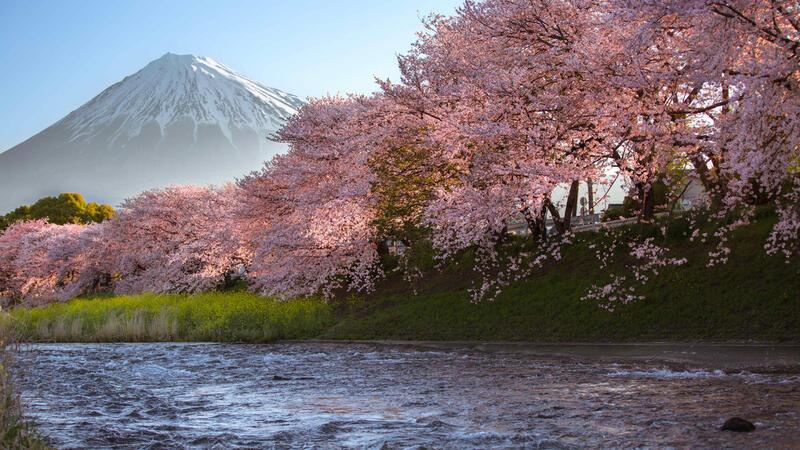 Найновіші Фотошпалери Цвітіння Сакури в Японії Природа, Фотошпалери Цвітіння Сакури, Фотошпалери японської Сакури, Фотошпалери квіти, Фотошпалери Японія id1907513112