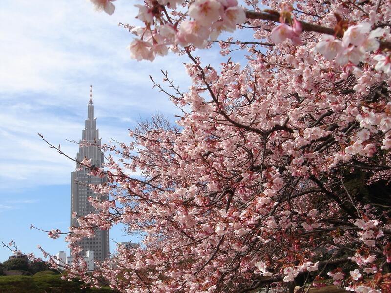 Найновіші Фотошпалери Цвітіння Сакури в Японії Природа, Фотошпалери Цвітіння Сакури, Фотошпалери японської Сакури, Фотошпалери квіти, Фотошпалери Японія id1697935989