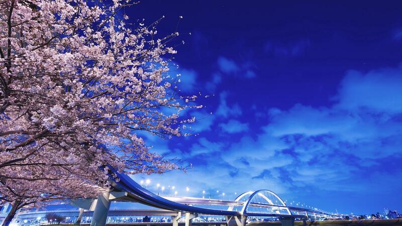 Новейшие Фотообои Цветения Сакуры в Японии Природа, Фотообои Цветение Сакуры, Фотообои японской Сакуры, Фотообои цветы, Фотообои Япония id1353740817