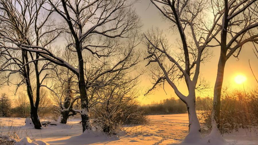 Уникальные обои Зимних лесов Природа, Зима, Лес, Закаты, Восходы 1967942892