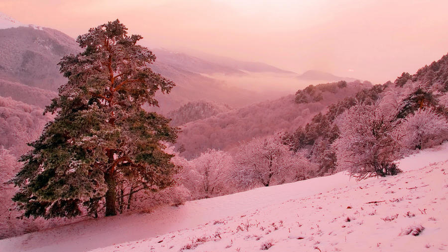 Уникальные обои Зимних лесов Природа, Зима, Лес, Закаты, Восходы 110538826