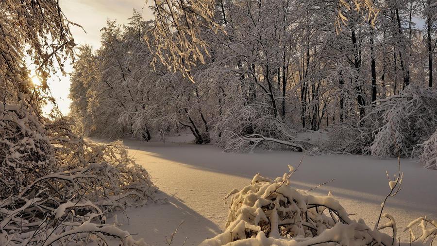 Унікальні шпалери Зимових лісів Природа, Зима, Ліс, Захід Сонця, Схід Сонця id1917911768