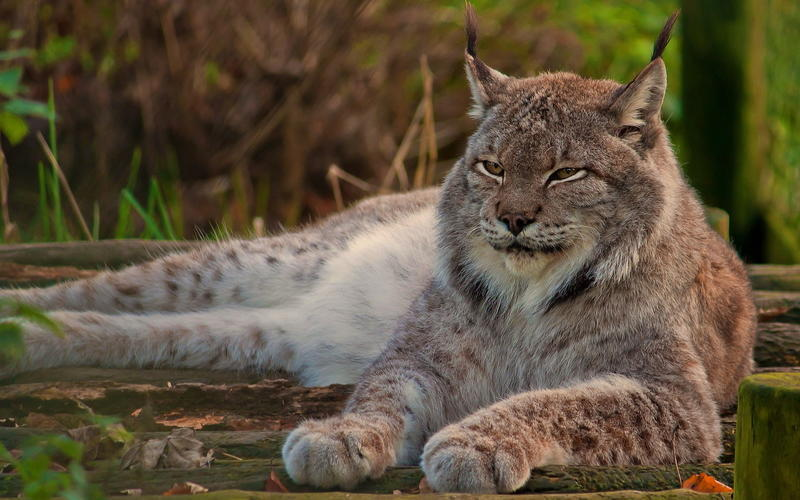 Забавные кошечки Природа, Кошки, Кошечки id1866218510