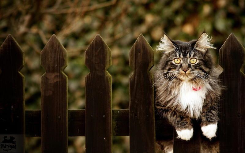 Забавные кошечки Природа, Кошки, Кошечки id1257660678