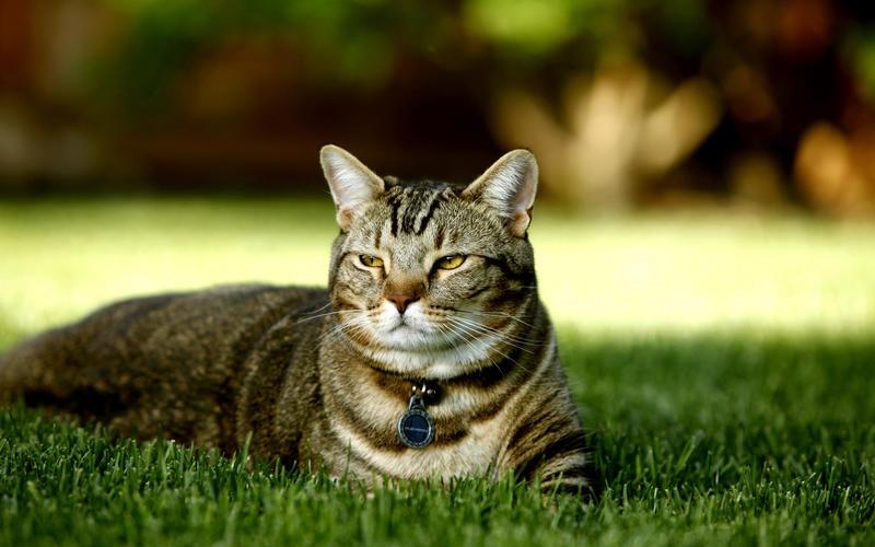 Забавные кошечки Природа, Кошки, Кошечки id440664855