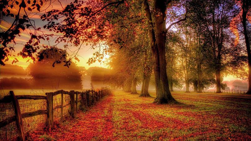 Чарівні та величні ліси  Природа, Ліс, Весна, Осінь, Арт id896595126