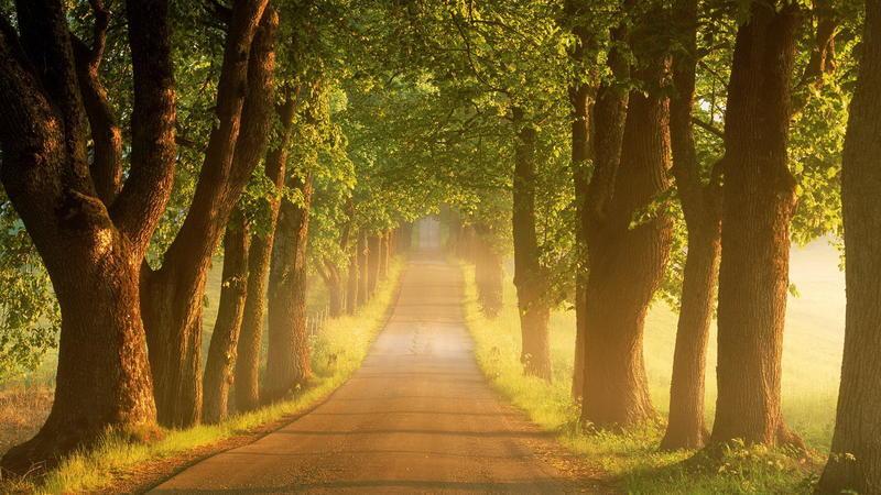 Чарівні та величні ліси  Природа, Ліс, Весна, Осінь, Арт id499529752