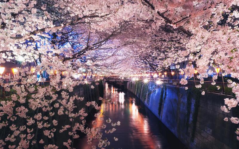 Newest Japan Sakura Blossom Wallpapers Природа, Wallpapers Sakura blossom, Wallpapers Japanese Sakura, Wallpapers flowers, Wallpapers Japan id660840314