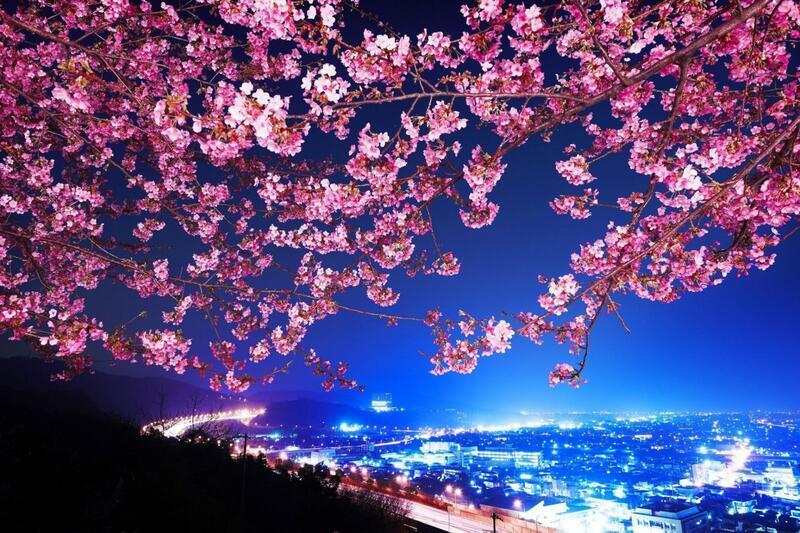 Newest Japan Sakura Blossom Wallpapers Природа, Wallpapers Sakura blossom, Wallpapers Japanese Sakura, Wallpapers flowers, Wallpapers Japan id110950327