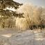 Унікальні шпалери Зимових лісів Природа, Зима, Ліс, Захід Сонця, Схід Сонця id95075561