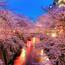 Newest Japan Sakura Blossom Wallpapers Природа, Wallpapers Sakura blossom, Wallpapers Japanese Sakura, Wallpapers flowers, Wallpapers Japan id987063060