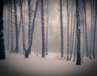 Уникальные обои Зимних лесов Природа, Зима, Лес, Закаты, Восходы 668563780