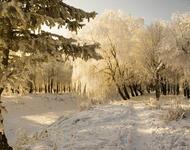 Кращі фотошпалери - Зима - Новий рік - на робочий стіл Природа, Кращі фотошпалери зими на робочий стіл, Шпалери для робочого столу, Зима, Ліси, Захід Сонця, Схід Сонця id636740184