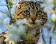 Кумедні кішечки Природа, Коти, Кішечки id88205556