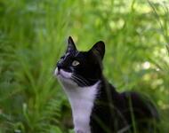 Кумедні кішечки Природа, Коти, Кішечки id1609260771