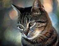 Кумедні кішечки Природа, Коти, Кішечки id2073159923