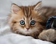 Кумедні кішечки Природа, Коти, Кішечки id1810620302