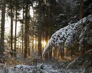 Унікальні шпалери Зимових лісів Природа, Зима, Ліс, Захід Сонця, Схід Сонця id1661669209