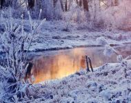 Унікальні шпалери Зимових лісів Природа, Зима, Ліс, Захід Сонця, Схід Сонця id720700773