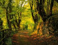Чарівні та величні ліси  Природа, Ліс, Весна, Осінь, Арт id1268094225