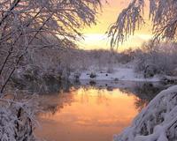 Уникальные обои Зимних лесов Природа, Зима, Лес, Закаты, Восходы 915770804