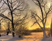 Уникальные обои Зимних лесов Природа, Зима, Лес, Закаты, Восходы 617856145