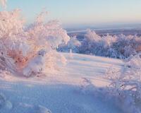 Уникальные обои Зимних лесов Природа, Зима, Лес, Закаты, Восходы 1205080415